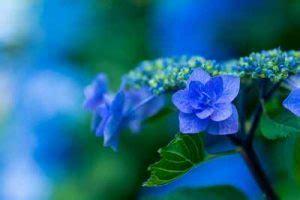 pflanzen die schnecken nicht mö schneckenresistente blumen pflanzen eine umfassende