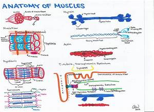 Animal And Plant Homeostasis And Physiology Study Guides