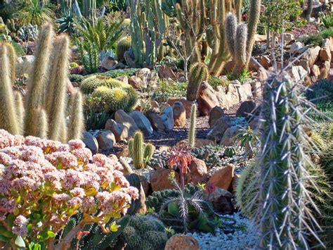 succulent gardens south africa what a garden should be soekershof the scientific backup