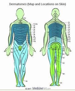 Cervical  U0026 Lumbar Dermatomes Map Of Upper  Lower Body  Leg