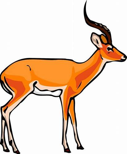 Clipart Gazelle Addax Antelope Impala Clip English