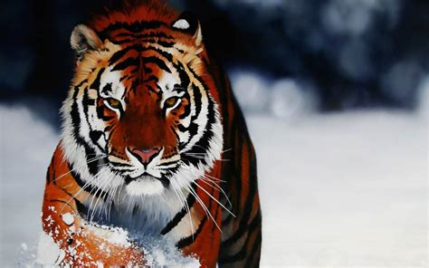 Hd Wallpapers Animals Tigers - snow animals tigers cartoonish animals winter