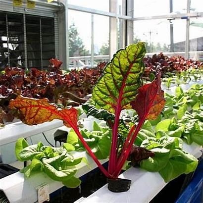 Hydroponic Indoor Garden Vegetable System Gardening Build