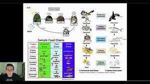 Ecological Diagrams  Food Chains  Webs   U0026 Pyramids