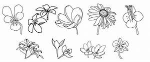 drawing different types of flowers   Art   Pinterest ...