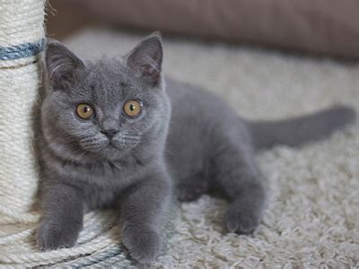 names for grey cats top 275 grey cat names popular name for your grey cat