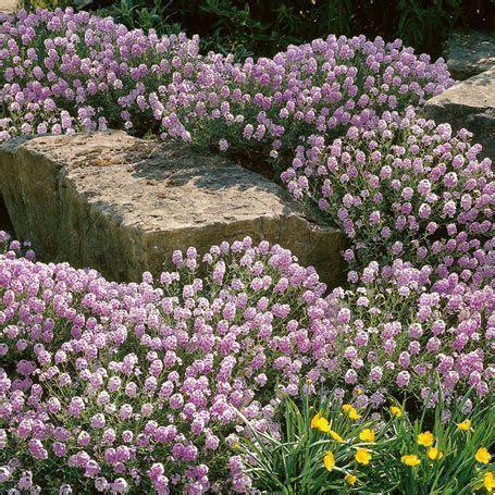 Garten Pflanzen Sonne by Sonne Gro 223 Blumiges Steint 228 Schel Bodendecker Garten