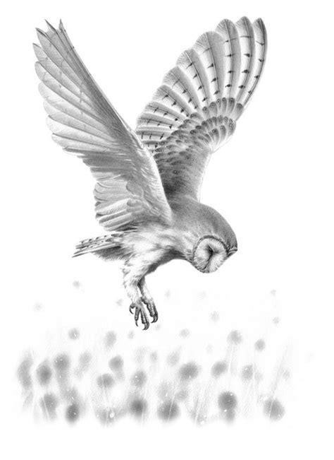 flying barn owl drawing barn owl in flight ii original drawing dibujo