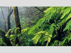 Flora and fauna Tenerife