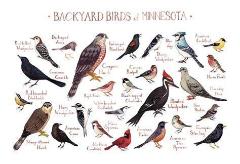 minnesota backyard birds field guide art print watercolor