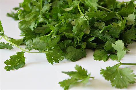 substitute for cilantro spicy black bean tacos