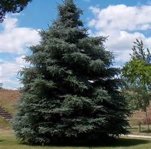 Local Nurseries Garden Centers by South Dakota Trees For Sale The Tree Center