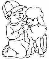Sheep Coloring Printable Lamb Pages Cl sketch template