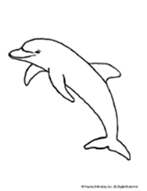 dolphin coloring page printable familyeducation