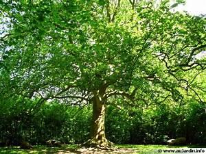 Quel Arbre Planter Près D Une Maison : les bonnes distances de plantation des arbres et des arbustes ~ Dode.kayakingforconservation.com Idées de Décoration