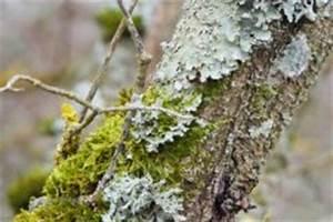 Schädlinge Am Kirschbaum : kirschbaumkrankheiten erkennen behandeln ~ Lizthompson.info Haus und Dekorationen