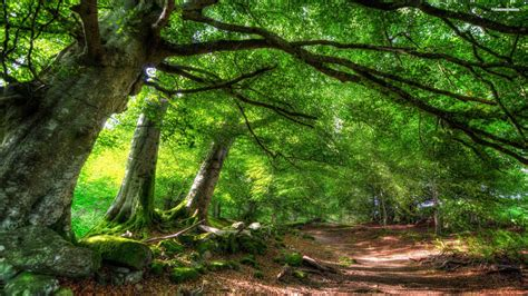 Green Forest Picture Hd by Green Forest Picture Hd Best Green Forest 1908