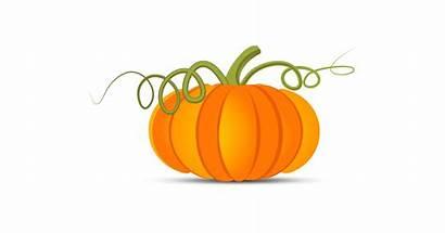 Pumpkin Vector Illustration Graphic Vectors Halloween Festival