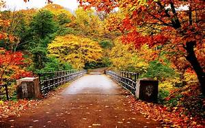 Autumn Wallpaper - Autumn Wallpaper (35867750) - Fanpop