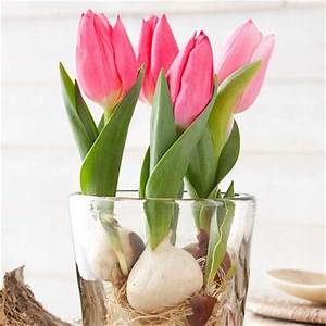 Blumenzwiebeln Im Glas : tulpen im portr t pflegetipps und dekoideen living at home ~ Markanthonyermac.com Haus und Dekorationen