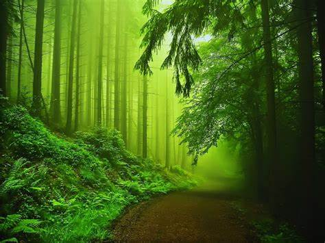 green, Nature Wallpapers HD / Desktop and Mobile Backgrounds