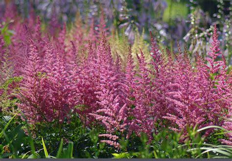 stauden für schattige plätze garten schatten pflanzen garten mit schatten pflanzen