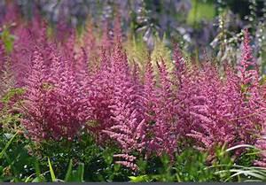 Schattenpflanzen Garten Winterhart : pflanzen schatten garten mit schatten pflanzen welche arten eignen sich hochbeet pflanzen ~ Sanjose-hotels-ca.com Haus und Dekorationen
