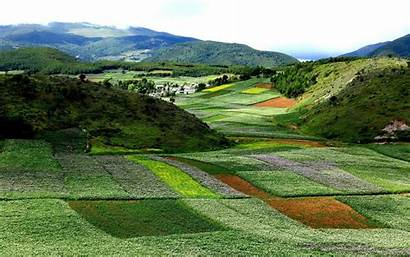 Yunnan Flowers Landscapes Bloom Nature China Wide
