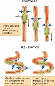 Compared To The Movement Of Peristalsis