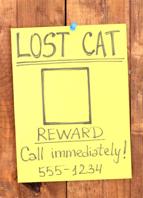 tips    find  lost cat catster