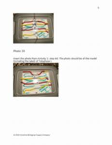 Mitosis And Meiosis Lab Manual Docx