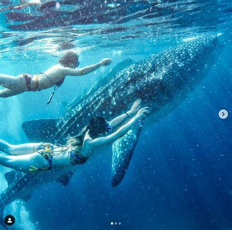 Ethical Swimming with Whale Sharks in Leyte, Philippines ...