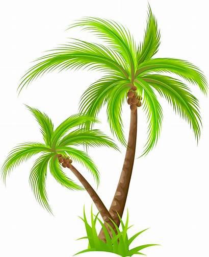 Palm Tree Clipart Clip Coconut Trees Transparent