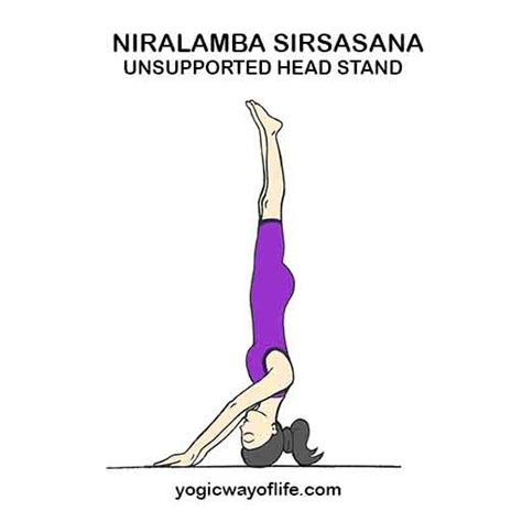 Headstand pose benefits the following muscles and hence can be included in yoga sequences with the corresponding muscle(s) focus Niralamba Sirsasana - Unsupported Head Stand