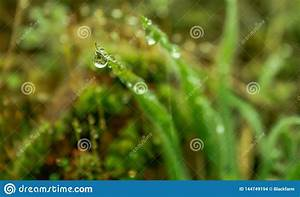 Beautiful, Leaves, With, Raindrops, Stock, Photo