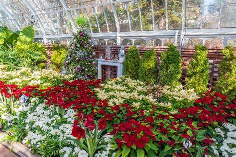 Winter Flower Show And Light Garden
