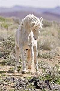 999 best images about animals- horses #7 on Pinterest ...