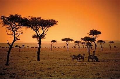 Kenya Savanna Animal Plant African Sun Trees
