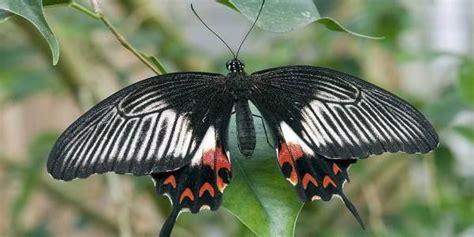 Farfalle In Casa by Casa Delle Farfalle Un Angolo Di Paradiso A Bordano Greenme