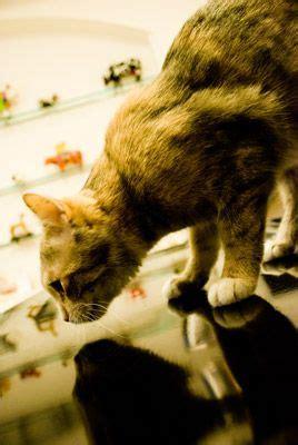 ihr tierarzt fuer homoeopathie  muenchen fuer hunde katzen