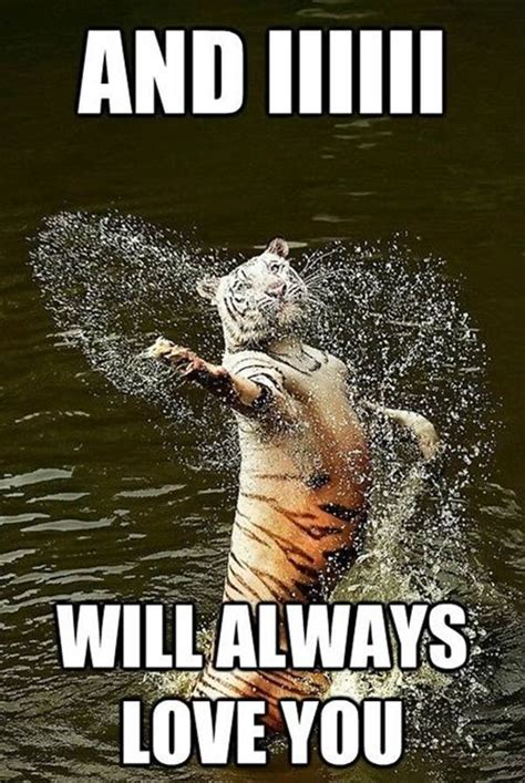 Love You Meme Funny - will always love you funny animal meme