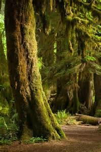 Washington Hoh Rainforest Trees