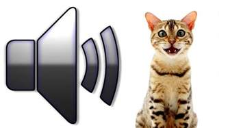 cat meowing sound effect