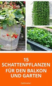 Schattenpflanzen Garten Winterhart : die 25 besten ideen zu schattengarten auf pinterest ~ Lizthompson.info Haus und Dekorationen
