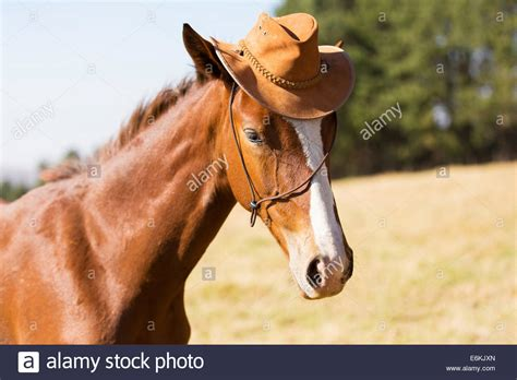 horse wearing hat funny stock  horse wearing hat