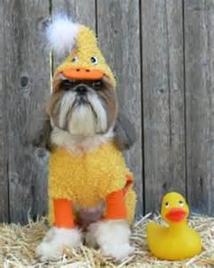Duck Dog Halloween Costume