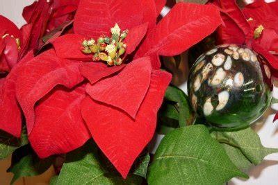 weihnachtsstern wieder zum blühen bringen den weihnachtsstern wieder zum bl 252 hen bringen so geht s