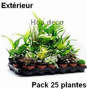 Plantes Pas Cher Paris : lot de 25 plantes 9cm pour mur v g tal ext rieur ~ Dailycaller-alerts.com Idées de Décoration