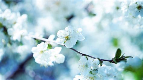 tips tips kesehatan wallpaper bunga
