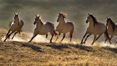 Horses Wild Burros Horse Running Mustang Mustangs